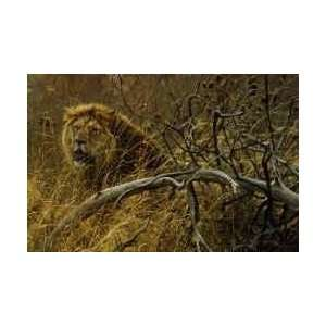 Robert Bateman   Encounter in the Bush African Lions: Home & Kitchen