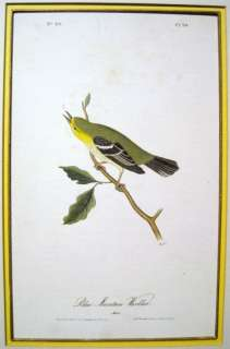 John James Audubon Blue Mountain Warbler 1844