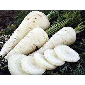 Lunar White Carrot 100 Seeds   Tender,Coreless,Sweet