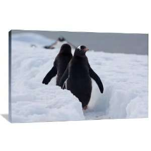 Penguin March   Gallery Wrapped Canvas   Museum Quality