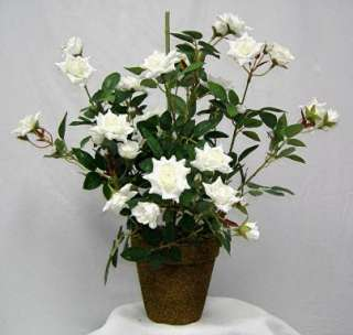 18 tall rose/sweet pea with pot*BG