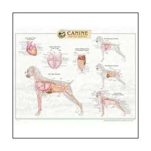 Canine Internal Organ Anatomy Chart 20 X 26 Health