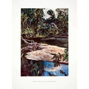 1906 Color Print Liberia Stream Africa Dry Season