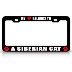 MY HEART BELONGS TO A SIBERIAN Cat Pet Auto License Plate