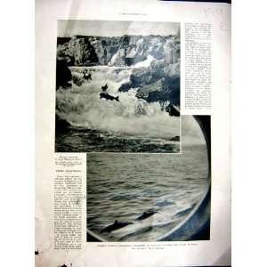 Dolphins Marine Salmon Fish Villeurbanne Decor 1936: Home