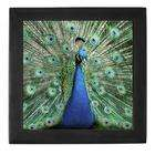 Artsmith Inc Keepsake Box Black Peacock with Beautiful Plumage